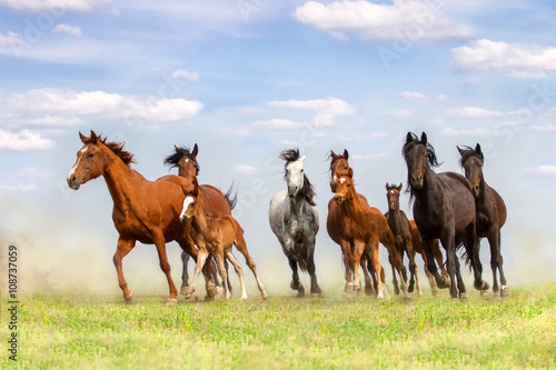 Horse herd run on spring pasture against blue sky