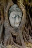 Testa di Buddha nellalbero  -  Thailandia Ayuttaya