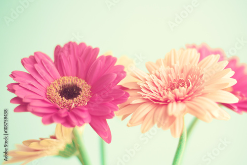Pink flowers over mint background Poster
