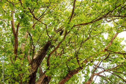 Foto op Plexiglas Landschappen Green tree in forest