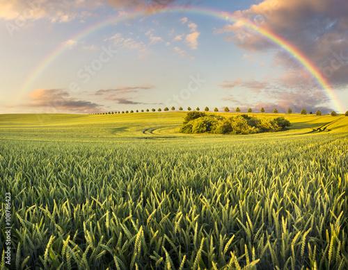 fototapeta na ścianę Wielobarwna tęcza nad wiosennym polem