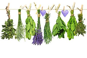 lavendel, minze, salbei, thymian und rosmarin mit herz