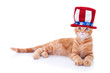 Patriotic American pet cat for fourth of July or July 4th