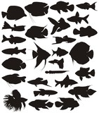 Aquarium tropical fish, vector set.