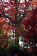 color autumn forest