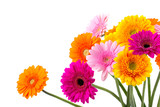 Bunte Blumen - Gerbera - Freisteller - 108930688