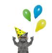 Cat celebrating birthday with balloons