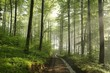 Spring beech forest after rainfall