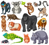 Different type of wildlife animals on white background
