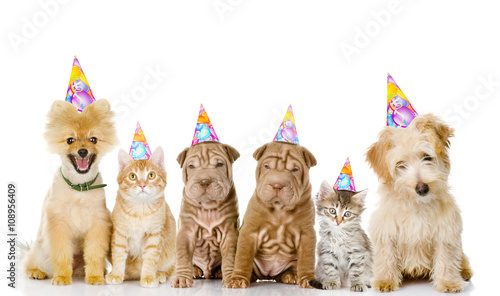 Group Of Cats And Dogs With Birthday Hats Isolated On White Bac