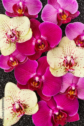 Panel Szklany Orchid flowers