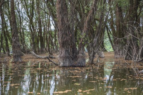 Flooded forest in spring seasone .