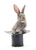 Brown rabbit and cylinder.