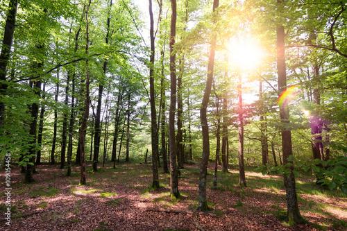 Très belle forêt avec le soleil dans les feuilles des arbres