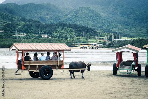 沖縄 水牛車