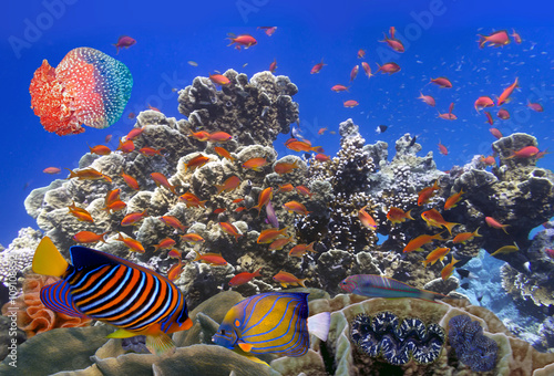 school-of-coral-goldfishes
