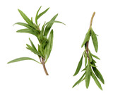 savory sprigs on a white surface