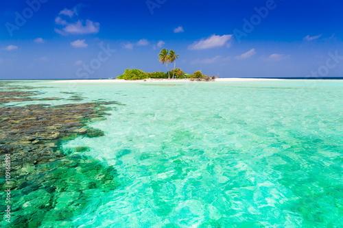 Foto op Canvas Groene koraal Maldives, tropical sea background 2!