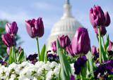 Spring flowers in Washington DC