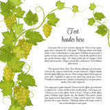 Bunch of grapes for label wine or other. Grapes pattern page in green