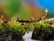 Many ants. Fairy picture for children. Moss, creek, bridge