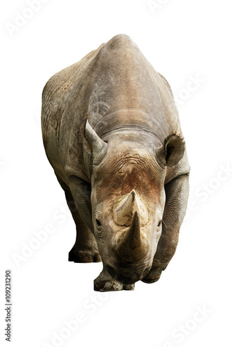 Papiers peints Hyène Big african Rhino isolated on a white background