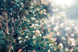 Beautiful fairy dreamy magic white tree flowers with dark green leaves, toned with instagram vsco filter in retro vintage washed out pastel, soft selective focus, lens sun flare, copyspace