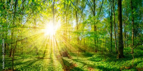Lichtung im Wald bei Sonnenschein