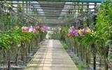 Fototapety Orchid nursery