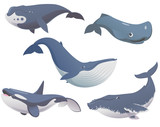 Fototapety Big set of cartoon cute and funny whales, sea animals set, sea creatures collection, cartoon animals set, vector illustration of blue whale, killer whale, sperm whale, bowhead whale and humpback whale