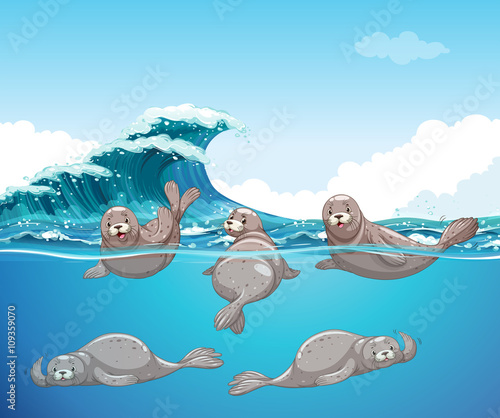 zabawne-foki-w-oceanie,-rysunek,-bajki