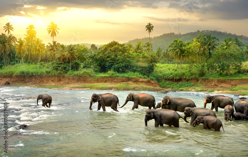 Fototapety, obrazy : Elephants in river
