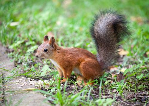 Tuinposter Eekhoorn Squirrel in the Park