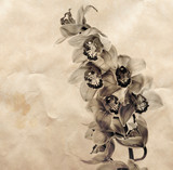 Vintage background with orchid flowers