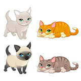 Group of cute cats with different colors