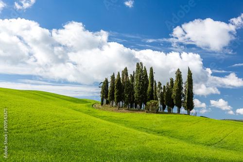 Zdjęcia na płótnie, fototapety na wymiar, obrazy na ścianę : Beautiful landscape in Tuscany, Italy
