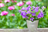 Bouquet of purple flowers in small bucket - horizontal