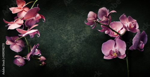 Foto op Canvas Spa Pink orchid on a dark background
