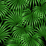 Seamless pattern with palms leaves. Decorative image tropical leaf of palm tree Livistona Rotundifolia. Background made without clipping mask. Easy to use for backdrop, textile, wrapping paper