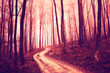 Creepy violet red saturated forest with road. Color filter and vintage filter effect used.