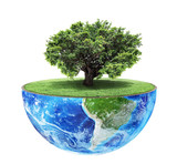 Eco concept. Big tree on the half of planet with green grass on