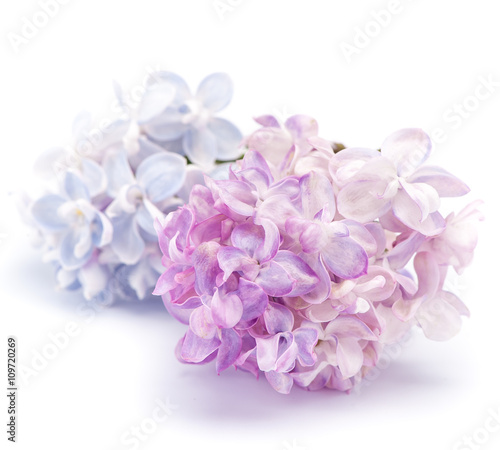 Lilac flowers on a white background.