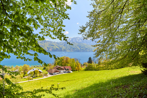 Fototapeta Leaves of a tree at lake Attersee