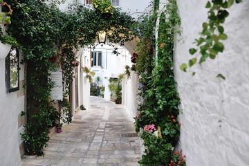 beautiful view of scenic narrow alley with plants, Ostuni, Apulia, Italy © tanialerro
