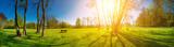 sunny morning in spring park