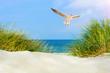 Leinwandbild Motiv Möwe am Strand mit Dünen
