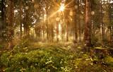 Słońce świeciło w mglisty las