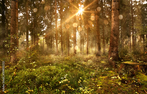 Fotobehang Betoverde Bos Sonne scheint in nebligen Wald