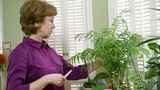A mature woman caring for her house plants trims a few dead leaves.