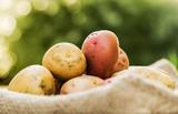 Potatoes, ripe root crops